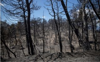 forest-fire-in-geraneia-mountains-most-destructive-in-decade-satellite-data-shows