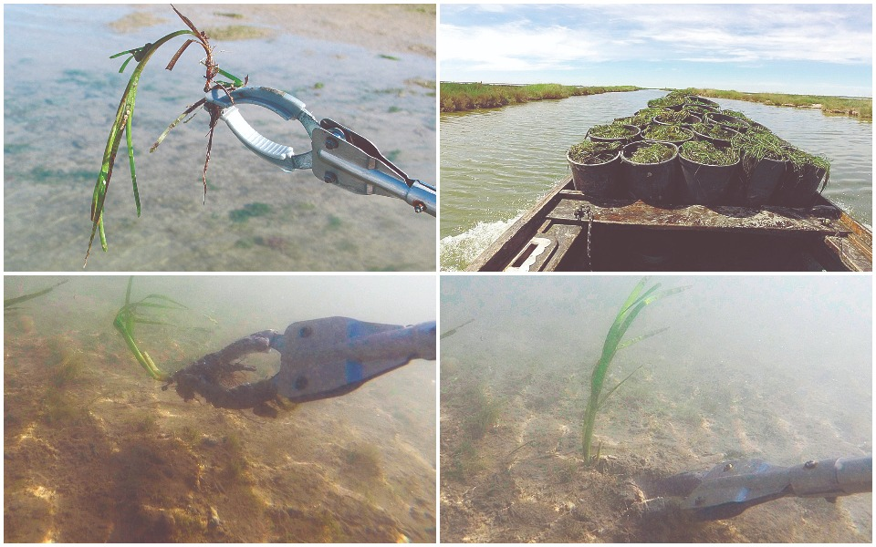 the-marine-gardeners-reforesting-our-seas1