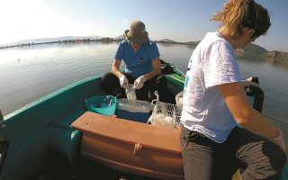 the-marine-gardeners-reforesting-our-seas