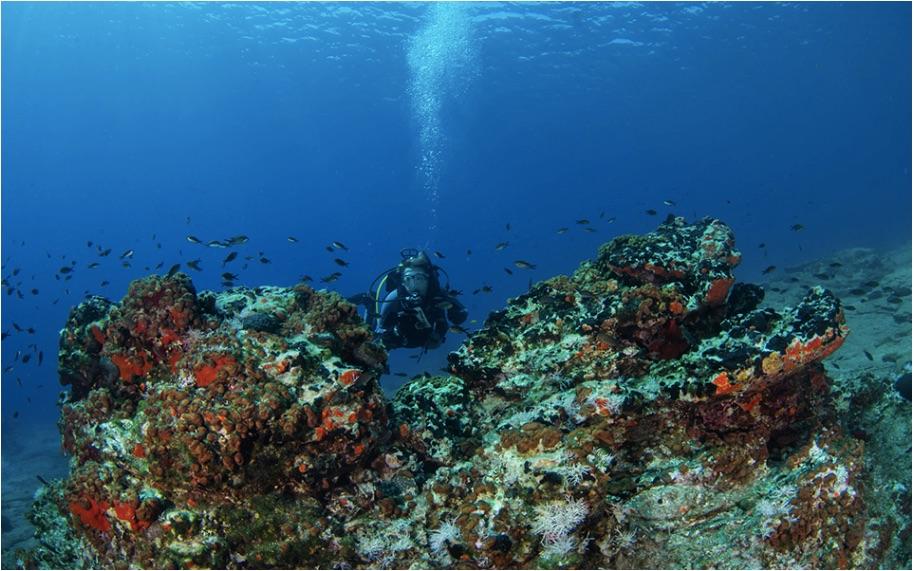 WWF report warns of Med 'tropicalization' | eKathimerini.com