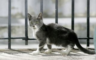 man-arrested-in-volos-for-killing-cat