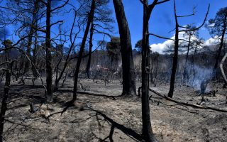forest-fires-and-negligence