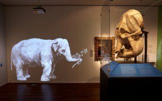 when-rembrandt-met-an-elephant