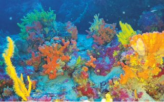 ancient-coral-formations-being-explored