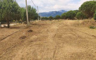 schinias-park-board-quits-over-forest-destruction