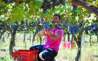 winemakers-getting-bitter-taste-of-climate-change