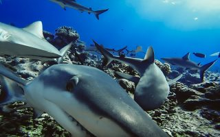 a-push-to-relabel-shark-attacks