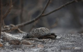 moody-amp-8217-s-cost-from-greek-fires-manageable-but-country-vulnerable-to-climate-change