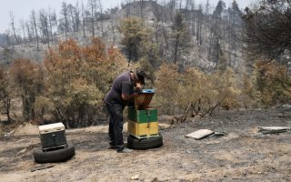 beekeepers-take-big-hit-from-summer-fires