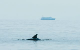 monitoring-the-dolphins-of-the-thermaikos-gulf
