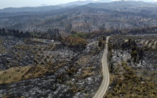 consensus-and-continuation-key-for-saving-our-forests