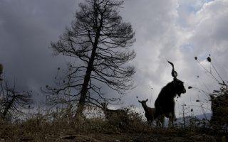 pm-laments-ecological-catastrophe