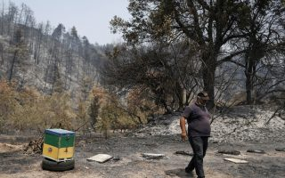 pine-honey-threatened-as-wildfires-destroy-hives-and-forests