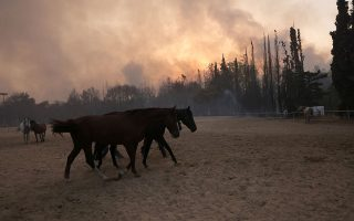 more-than-200-racing-horses-rescued-from-varybobi-inferno