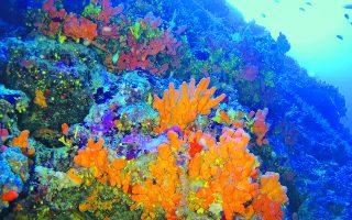 mediterranean-marine-life-under-threat