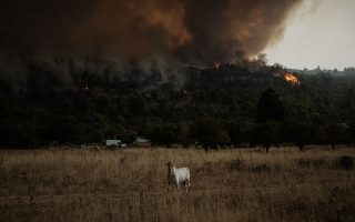 blaze-decimating-pine-forest-for-fifth-day-northwest-of-athens