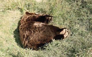 killings-of-endangered-animals-spark-outrage