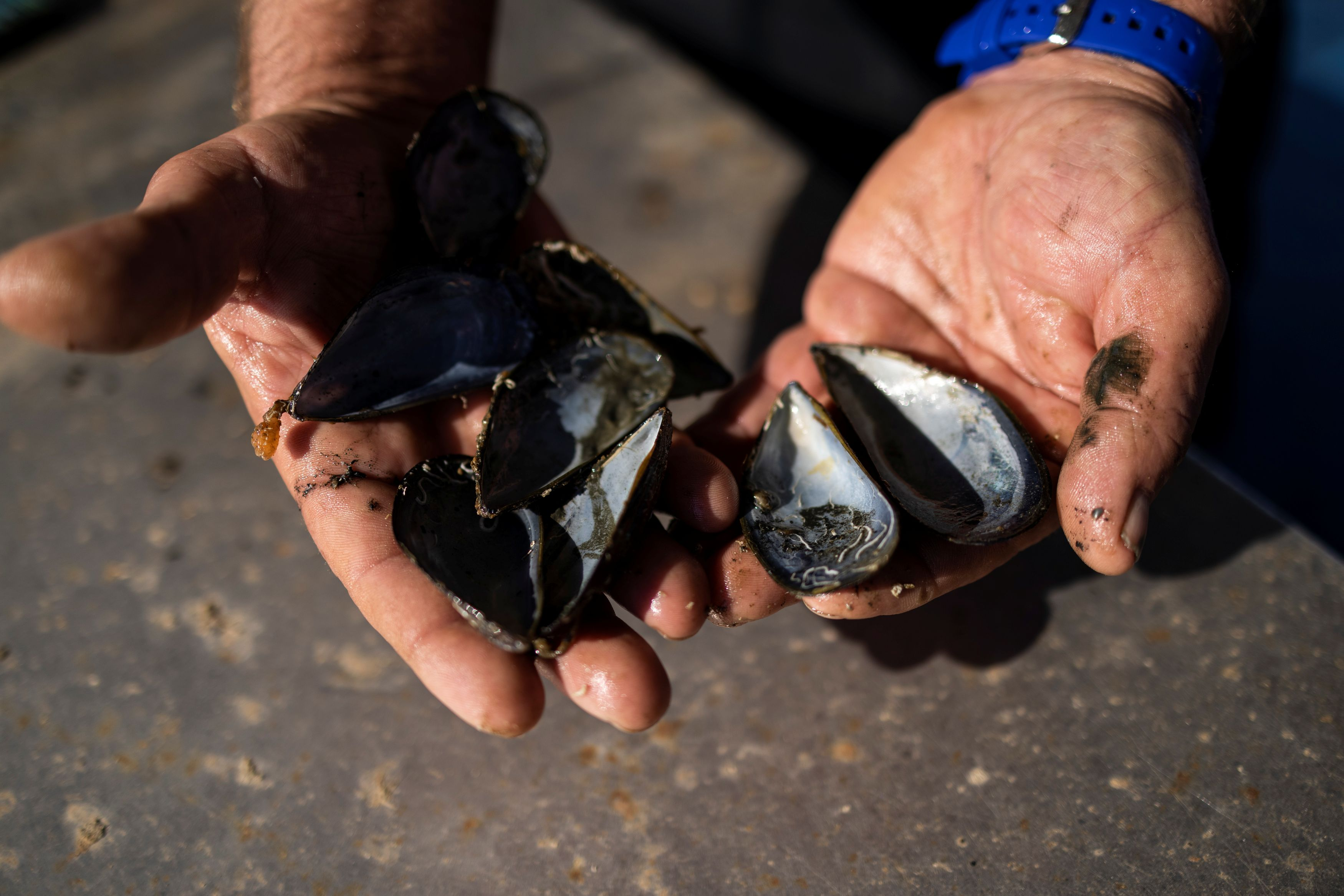 extreme-heat-ravages-greece-s-mussel-harvest1