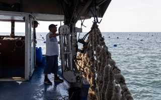 extreme-heat-ravages-greece-s-mussel-harvest