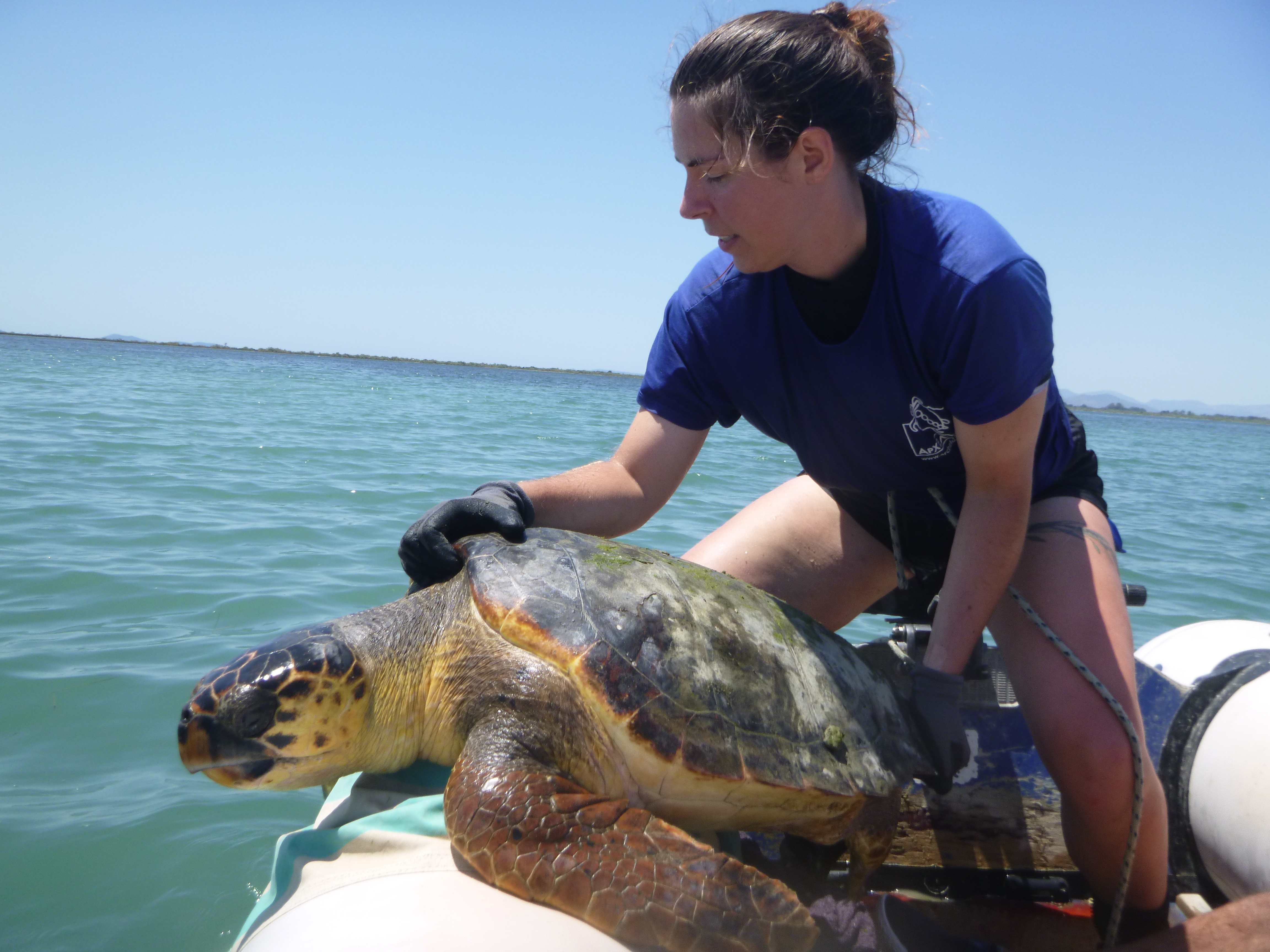 fighting-for-turtles-a-story-of-conservation-from-the-mediterranean1