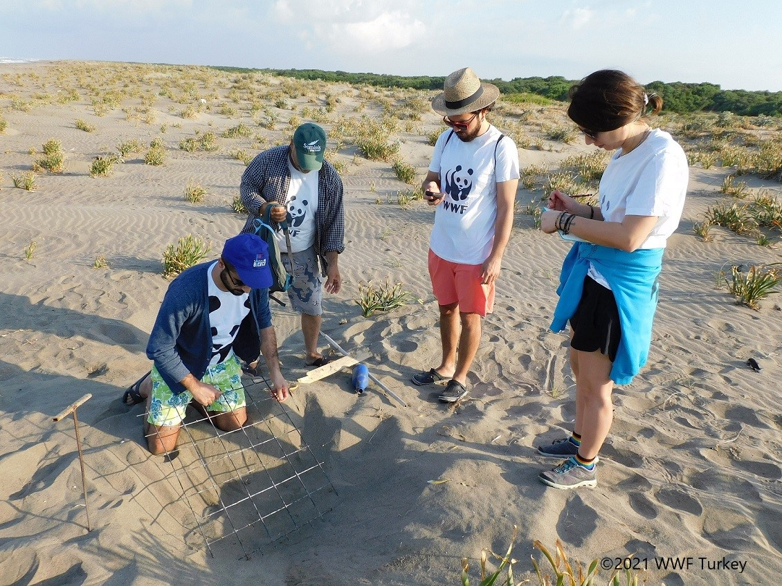 fighting-for-turtles-a-story-of-conservation-from-the-mediterranean5