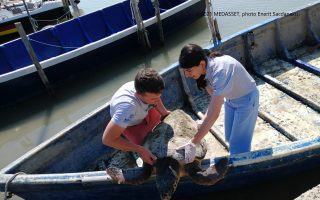 fighting-for-turtles-a-story-of-conservation-from-the-mediterranean